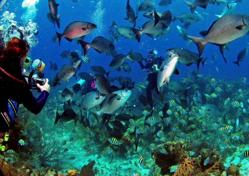 Belize-City-Scuba-Diving-Belize-Scuba-Diving