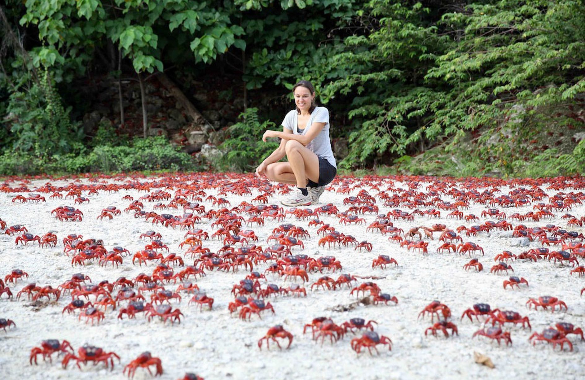 Migrating-red-crabs-in-Christmas-Island-Australia-MAIN