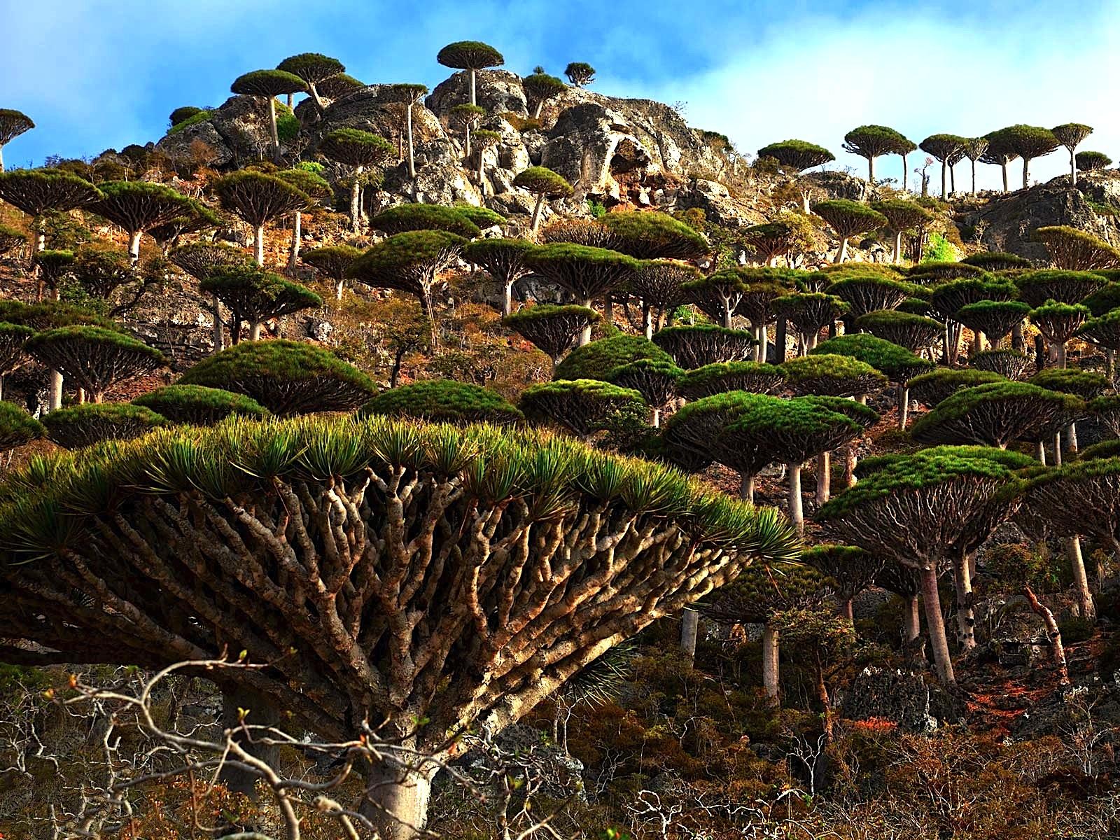 Socotra.original.1994