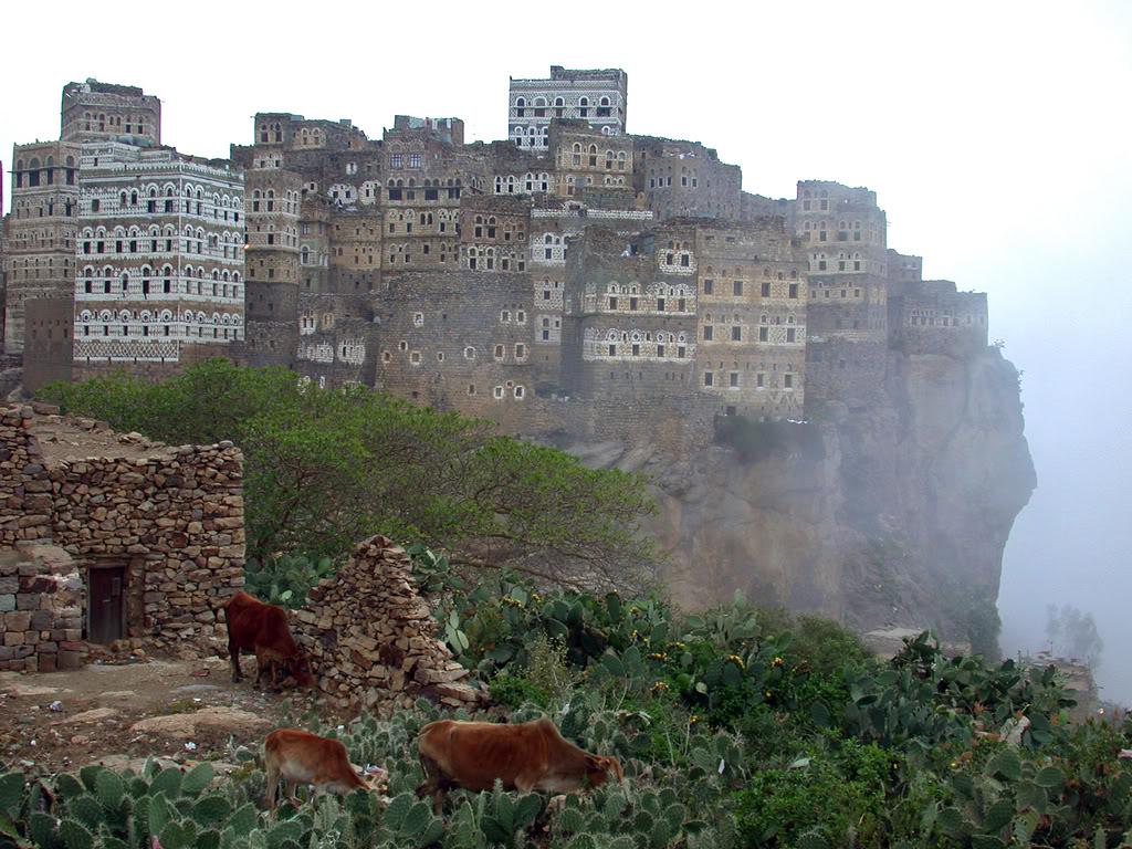 socotra-yemen-viii